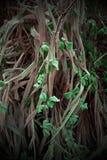 Härliga ogräs i trädgården i abstrakta former Arkivbild