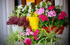 Härliga olika blommor Royaltyfri Foto