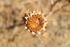 Härliga olika sommarväxter med taggbakgrund är suddighet arkivfoton