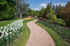 Härliga olika sorter av tulpan i botaniska trädgården av villan Taranto i Pallanza, Verbania, Italien royaltyfri foto
