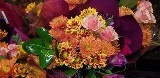 Härliga orange mångfärgade blommor royaltyfri foto
