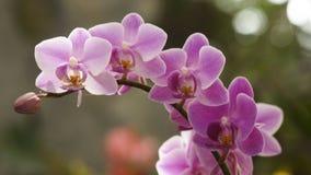 härliga orchids royaltyfri fotografi