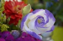 Härliga ordnade blommor Arkivfoto