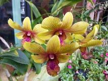 Härliga orkidéblommor för natur mycket arkivbild