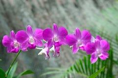 härliga orkidér över gröna blad Arkivfoto