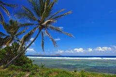 härliga palmträd Arkivbild