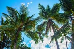 Härliga palmträd royaltyfri foto
