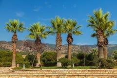 Härliga palmträd på bakgrunden av höga berg och blå himmel arkivfoto