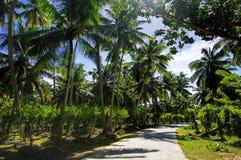 Härliga palmtrees Royaltyfria Bilder