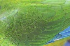 Härliga papegojafjädrar royaltyfria foton