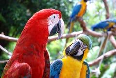 härliga papegojor Fotografering för Bildbyråer