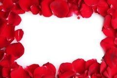 härliga petalsredro Royaltyfria Bilder