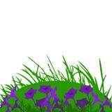 Härliga petunior på en gräsbakgrund Arkivbild