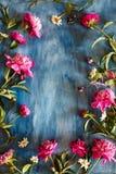 Härliga pionblommor på mörk texturerad bakgrund arkivfoto