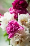 Härliga pionies nära fönstret bakgrundsbanret blommar datalistor little rosa spiral royaltyfria bilder