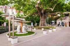 Härliga platser och sikt i en liten kuststad Mlini, bredvid Dubrovnik Gammal planetree royaltyfri bild