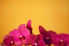 Härliga purpura orchids Arkivbilder
