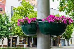 Härliga purpurfärgade blommor i blomkruka på gatalampan postar polen i staden arkivbilder
