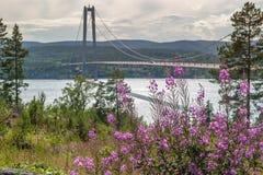 Härliga purpurfärgade blommor och den höga kustbron, Sverige royaltyfri foto