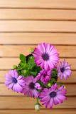 Härliga purpurfärgade tusenskönor med utrymme för text royaltyfri bild