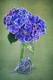 Härliga purpurfärgade vanlig hortensiablommor royaltyfria bilder