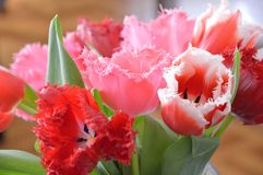 Härliga röda blommor i en vas royaltyfria foton