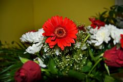 Härliga röda och vita blommor som gör ditt hem mer hemtrevlig Royaltyfria Foton