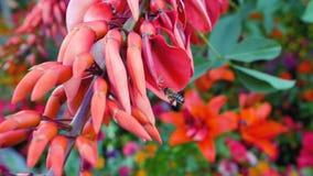 Härliga röda ovanliga färger som korall Fotografering för Bildbyråer