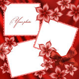 härliga röda ramfoto Arkivfoto
