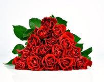 Härliga röda rosor på den vita bakgrunden Royaltyfria Foton