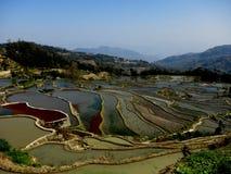 Härliga ris terrasserade fält av Hani etniskt folk i Yuanyang Royaltyfria Bilder