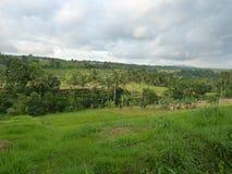 Härliga risfält av Jatiluwih Royaltyfria Foton