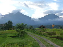 Härliga risfält av Jatiluwih, Bali, Indonesien Arkivbild