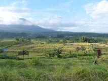 Härliga risfält av Jatiluwih, Bali, Indonesien Arkivfoton