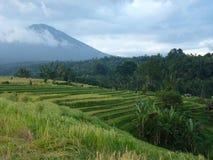 Härliga risfält av Jatiluwih, Bali, Indonesien Fotografering för Bildbyråer