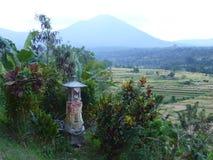 Härliga risfält av Jatiluwih, Bali, Indonesien Arkivbilder