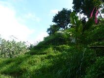 Härliga risfält av Tegalalang, Bali, Indonesien Royaltyfri Foto