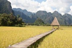Härliga risfält och berg i Vang Vieng, Laos Arkivfoton