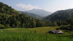 Härliga risfältfält och berg på surrounden Fotografering för Bildbyråer