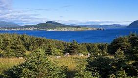 Härliga Rocky Harbour, Newfoundland arkivbilder