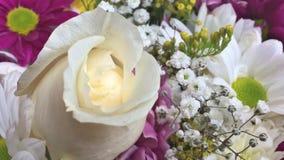 Härliga rosa blom stock video