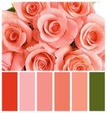 Härliga rosa blommor som bakgrund Palett med att bo korallfärg fotografering för bildbyråer