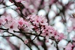 Härliga rosa färg Royaltyfria Bilder