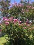 Härliga rosa färgblommor Arkivbild