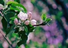 Härliga rosa färgblommor Arkivfoto