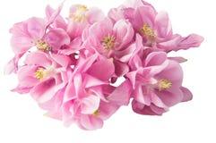 Härliga rosa färgblommor Royaltyfria Bilder