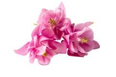 Härliga rosa färgblommor Royaltyfri Bild