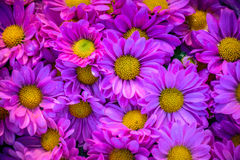 Härliga rosa färgblommor Arkivfoton