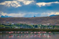 Härliga rosa flamingo på en bakgrund av berg Shevelev Royaltyfria Foton