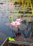 Härliga rosa Lotus, rosa näckros, natur Royaltyfria Bilder